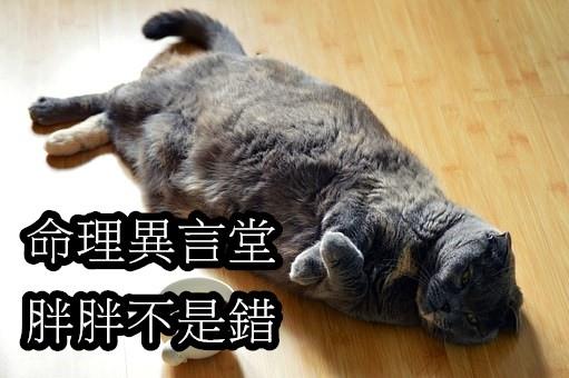 cat-1351612__340.jpg