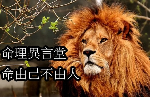 lion-3372720__340.jpg