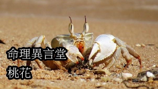 crabs-950463__340.jpg