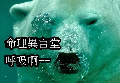 polar-bear-484515__340.jpg