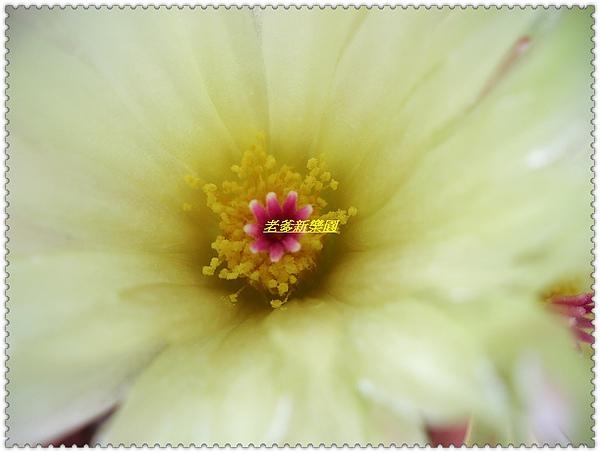 nEO_IMG_CIMG7718.jpg