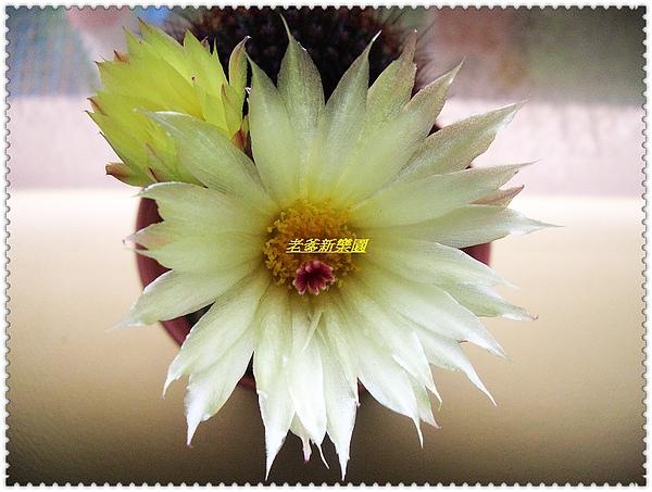 nEO_IMG_CIMG7698.jpg