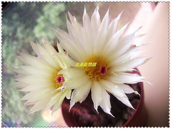 nEO_IMG_CIMG7712.jpg