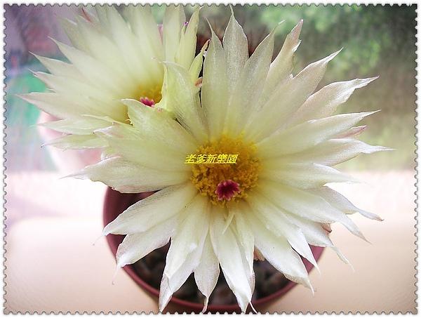 nEO_IMG_CIMG7714.jpg