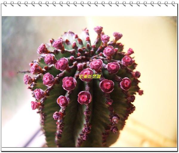 nEO_IMG_CIMG6550.jpg