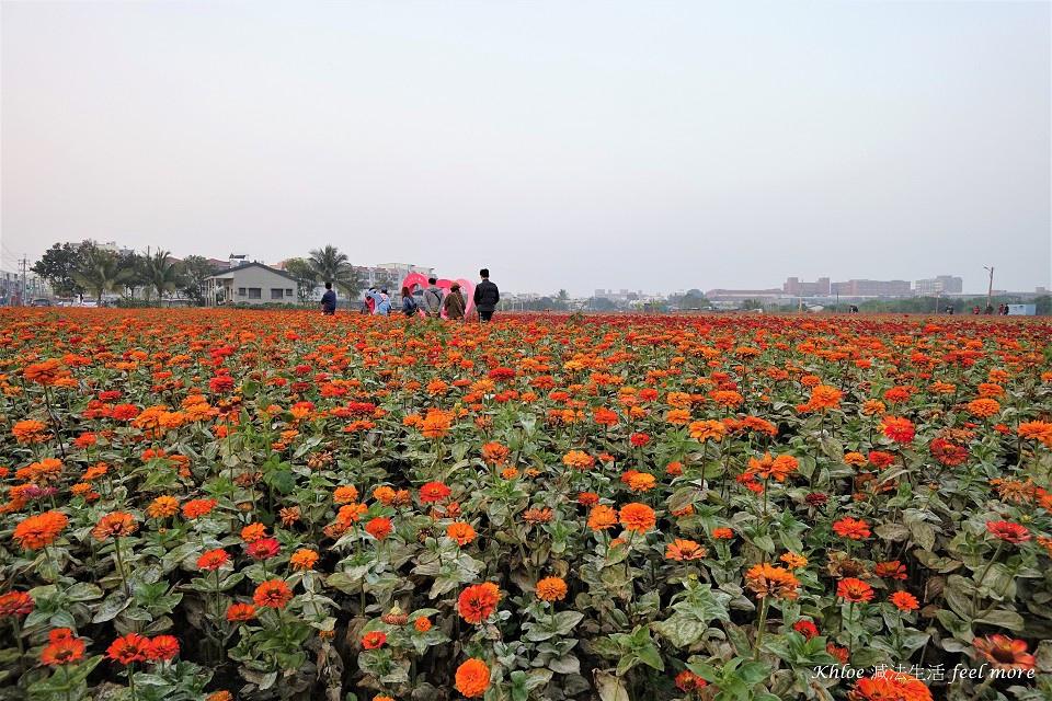 台南鹽水月津港美食花海12.jpg