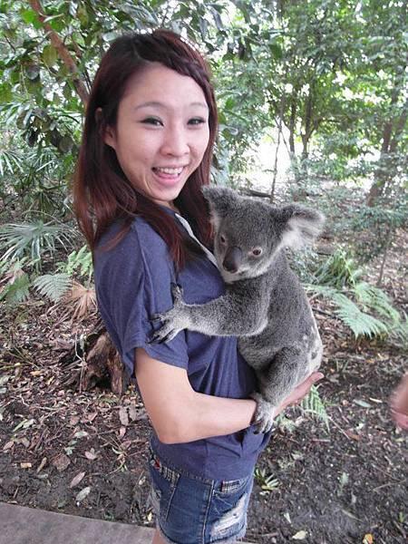13 Koala