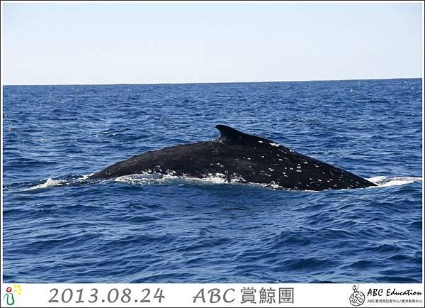 ABC 賞鯨團