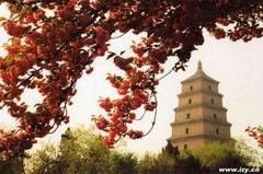 大慈恩寺的大雁塔
