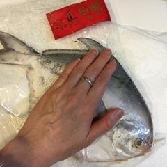 魚寶貝_4464