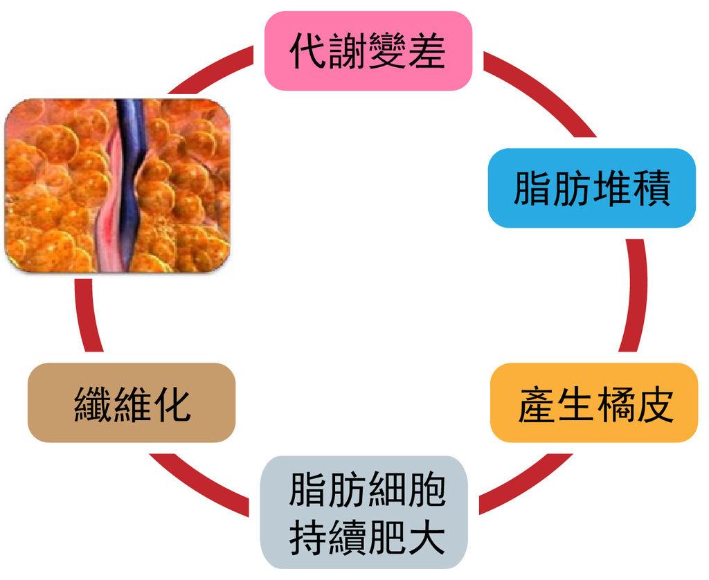 脂肪惡性循環.jpg