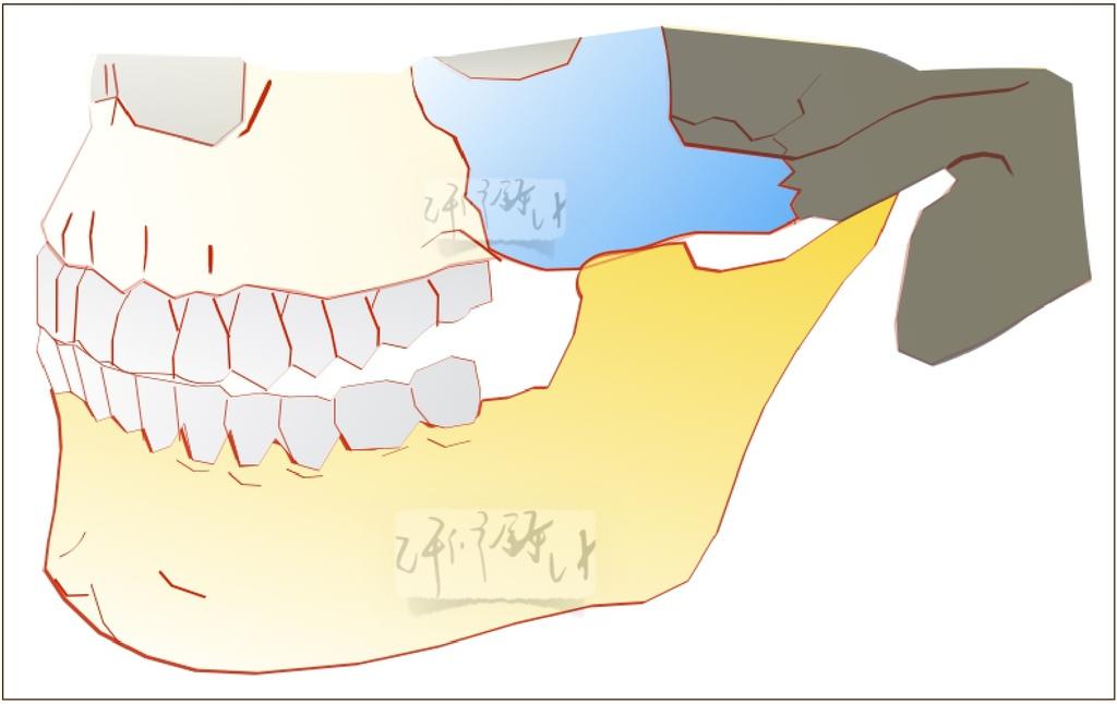 許修銨醫師 - 眼見不為憑 顎臉型分析(一)一般臉型1.jpg