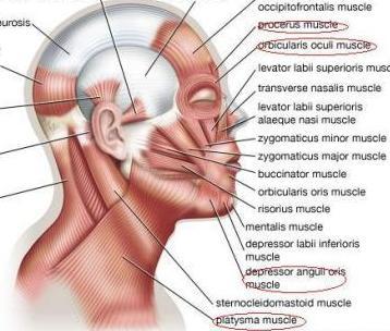 盧采葳醫師 - 肉毒桿菌素拉提(BoLift) 改善鬆弛與疲態感1.jpg