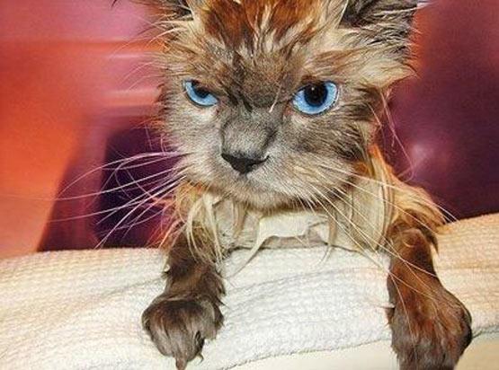 angry_wet_cat.jpg