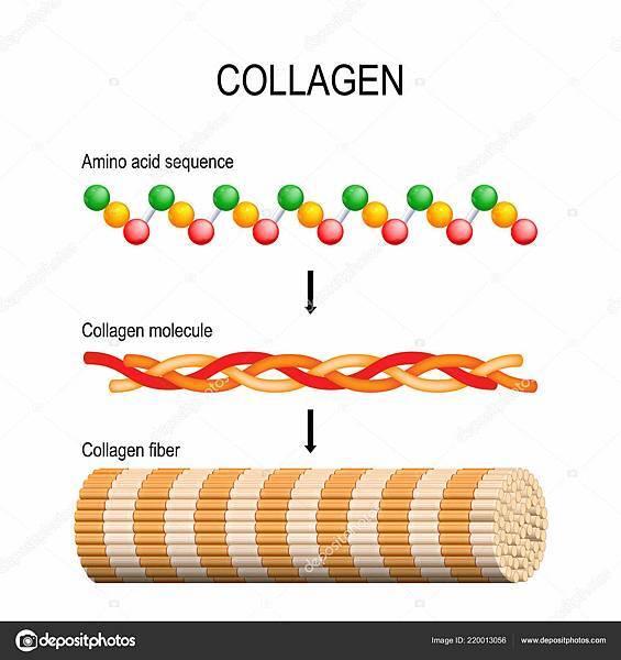 depositphotos_220013056-stock-illustration-collagen-fiber-molecule-amino-acid