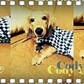 Cody_Nov1