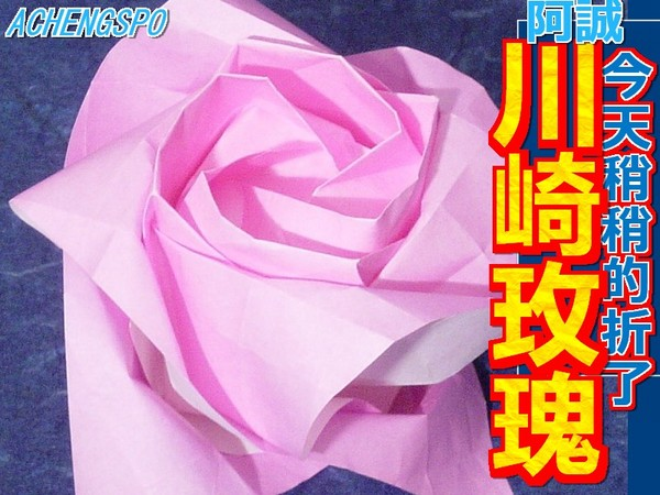 川崎玫瑰 KAWASAKI ROSE NEWS
