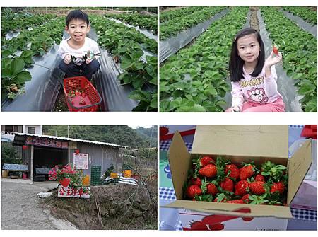 大湖採草莓.jpg