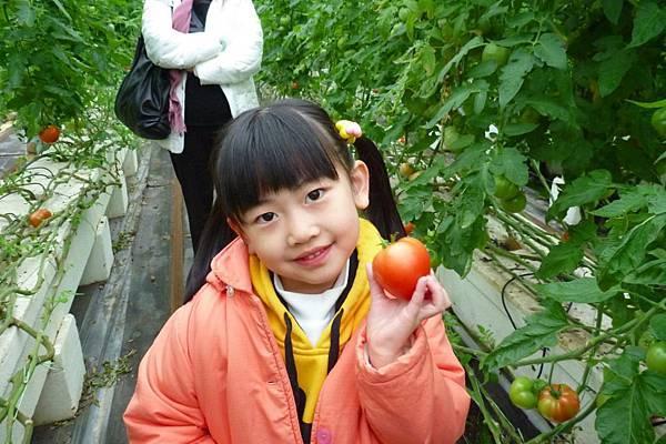Ashley採蕃茄(1)s.jpg