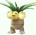 103 椰蛋樹.png