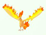 146 火焰鳥.png