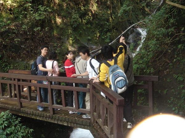 雅致的小木橋  之2
