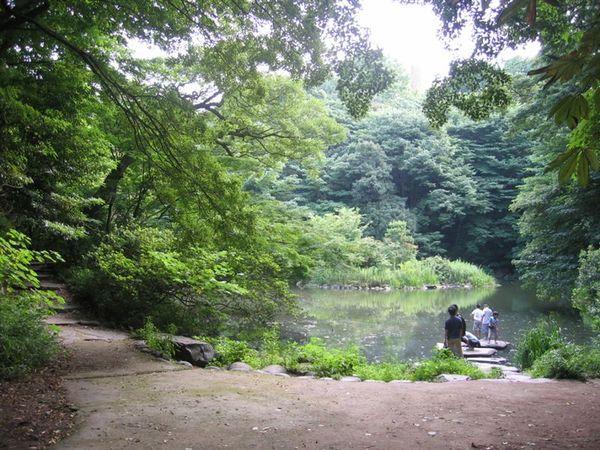 東大也有個湖!台大是醉月湖,他們叫「三四郎湖」