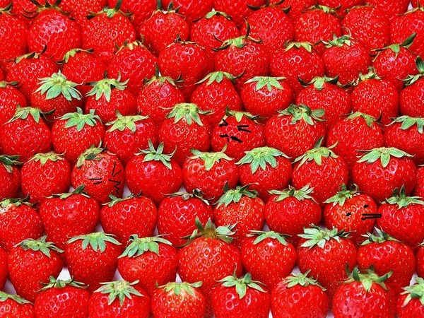 fruit_strawberry_wallpaper_Vol_014_SN157.JPG