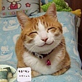 happycat[1].JPG