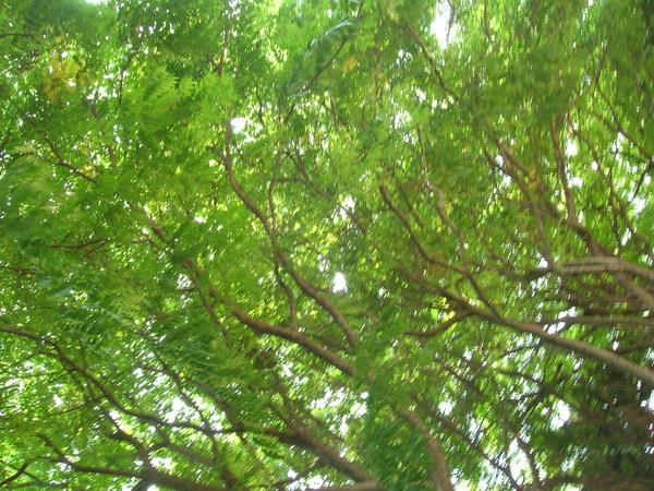 在這樹陰下乘涼>>超涼ㄉ>>舒服