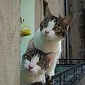 【可愛的貓貓】師兄,你往前點,我看不清楚