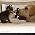 【可愛的貓貓】小貓貓