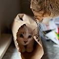 【可愛的貓貓】貓媽咪原諒可愛的貓貓阿