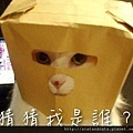 【可愛的貓貓】貓咪大盜