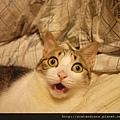 【可愛的貓貓】神馬,明天開學?