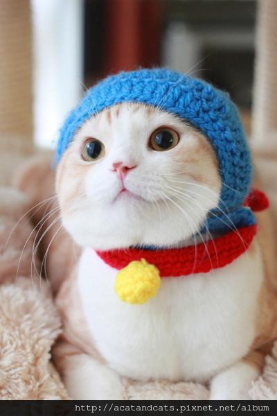 可愛的貓-哆啦貓