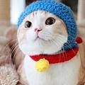 【可愛的貓貓】可愛的貓-哆啦貓