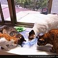 【可愛的貓貓】好奇的貓貓