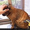 【可愛的貓貓】貓貓專用-神奇脫毛梳