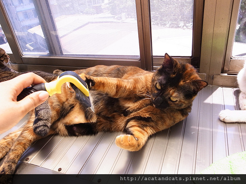 貓貓用脫毛梳