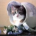 【可愛的貓貓】喵喵~~我的新房間