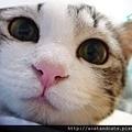 【可愛的貓貓】可愛貓
