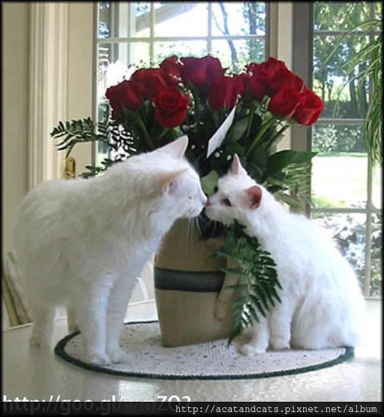 【可愛的貓貓】找個把你當成寶貝的人,你才會很幸福~