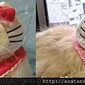 【可愛的貓貓】KITTY凱蒂喵