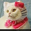 【可愛的貓貓】什麼眼神?