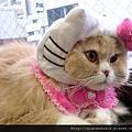 【可愛的貓貓】真實版KITTY