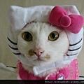 【可愛的貓貓】好可愛的無辜臉