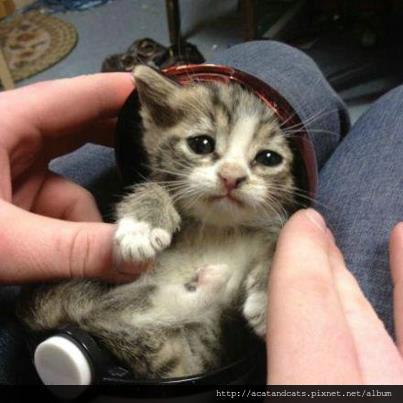 【可愛的貓貓】收服了一隻可愛貓貓神奇寶貝^^