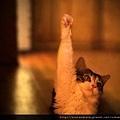 【可愛的貓貓】今年七夕打算自己一個人過的舉手。 。 。