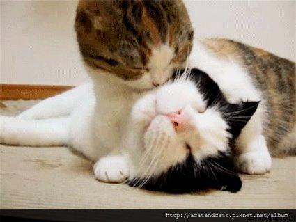 【可愛的貓貓】幸福是神馬